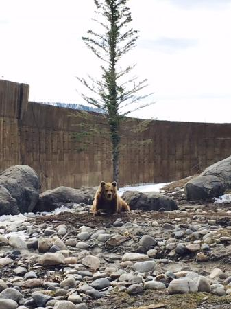 Montana Grizzly Encounter: Maggie loves her adoring fans!
