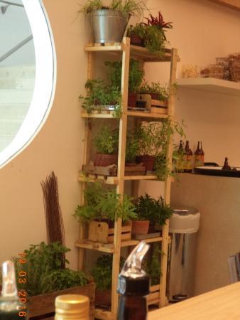Estante com plantas naturais dentro da cafeteria picture - Estantes para plantas ...