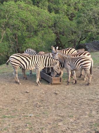 Safari West: A few shots from our safari.
