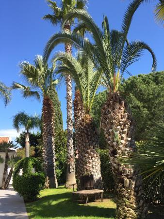 Villa Orchidea : le belle palme