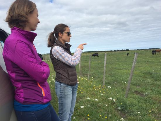 King Island Farm Tours - Meat Your Beef: photo4.jpg