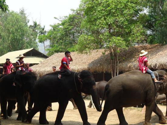 this small elephant is reaaaallly cute picture of maetang elephant park chiang mai tripadvisor. Black Bedroom Furniture Sets. Home Design Ideas