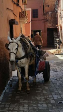 Riad Birdy: Mule and cart outside the front door