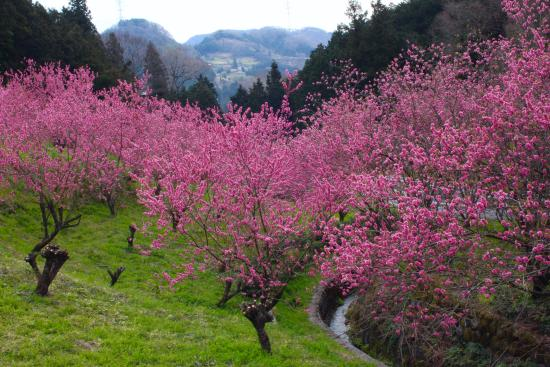 Higashichichibu-mura, Nhật Bản: 花桃の郷