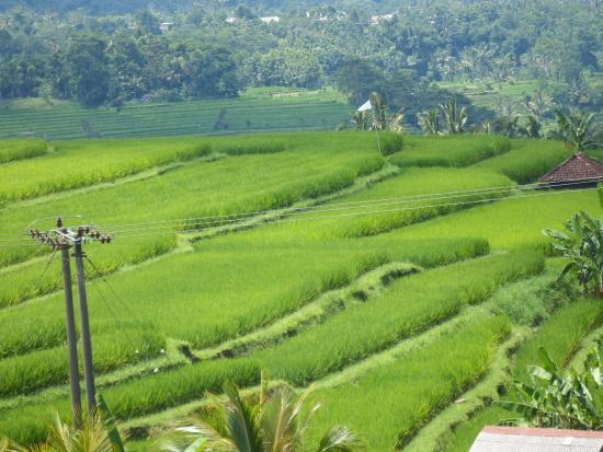 Jatiluwih Green Land: 広大な棚田