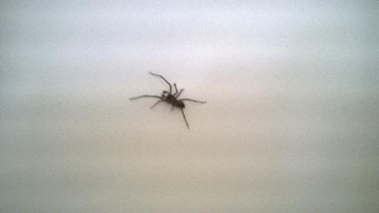 Studio 6 Aberdeen, MD : same spider closer up