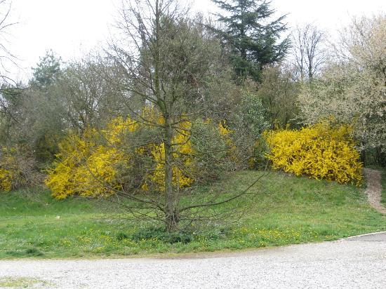 cespugli di fiori foto di parco del cormor udine
