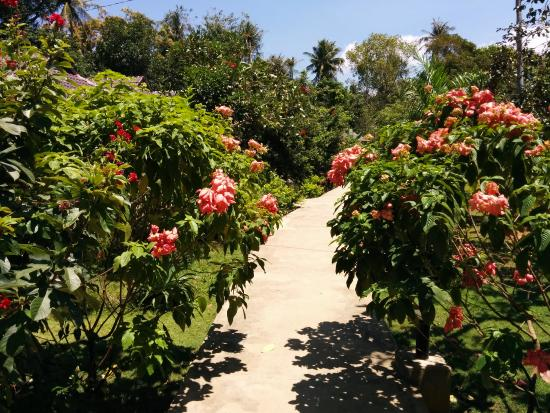 Nhat Lan: The garden (well maintained)