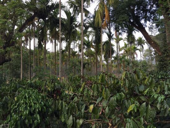Turtle Pond - A Wandertrails Showcase: Coffee Estate