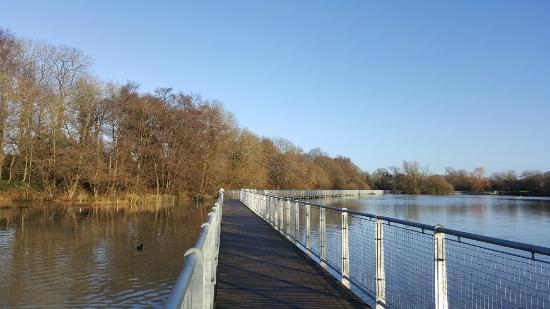 Ifield Mill Pond and Bewbush Water Gardens