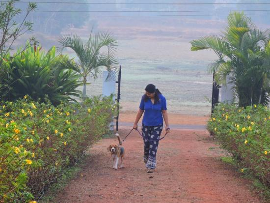 Curtorim, Hindistan: Happy hosts Bennita Ganesh and their extended canine family