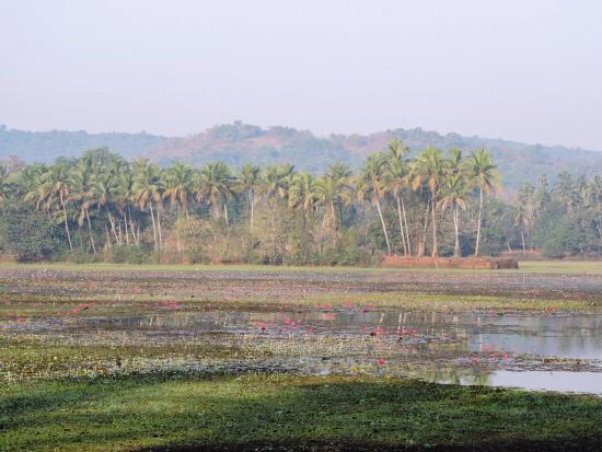 Curtorim, Índia: Beautiful vistas to explore