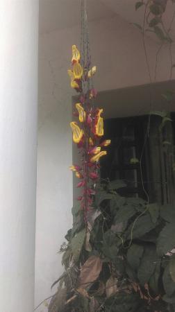 Velan Hotel Ritz: IMAG2860_large.jpg
