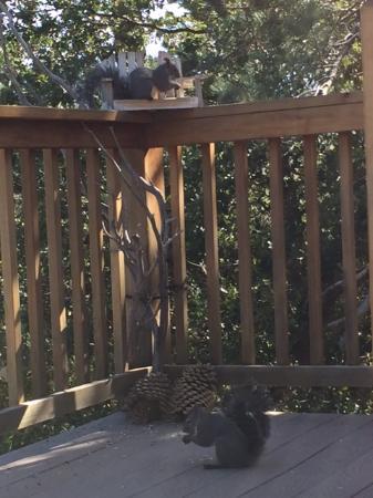 Idyllwild, CA: Squirrels