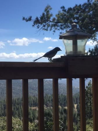 Idyllwild, CA: Birds