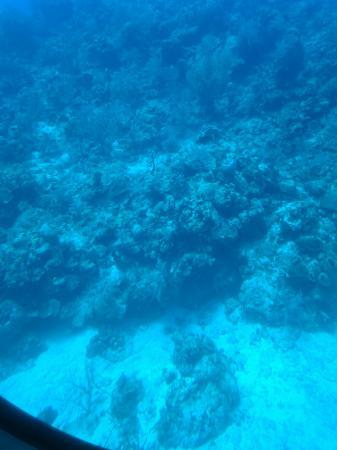 George Town, Grand Cayman: DSC_1149_large.jpg