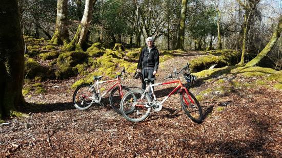 Lyne's Rent A Bike: 20160330_103556_large.jpg