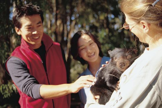 Legana, Αυστραλία: Enjoy meeting a devil