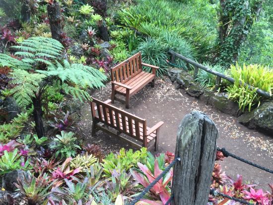 Epsom, Nueva Zelanda: Eden garden late summer