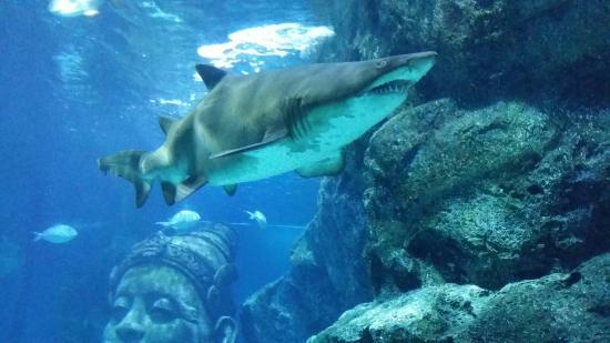 Image Result For Sea Aquarium Singapore Admission Fee