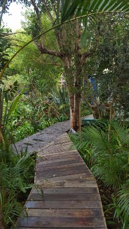 Bamboo the Guesthouse: Boardwalk and exotic plants