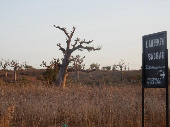 campement baobab popenguine s n gal voir les tarifs et avis camping tripadvisor. Black Bedroom Furniture Sets. Home Design Ideas