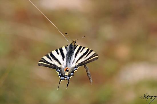 Vimioso, Portugal: Fauna & Flora