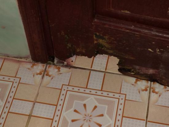 Lai Chau, فيتنام: porte de la salle de bain