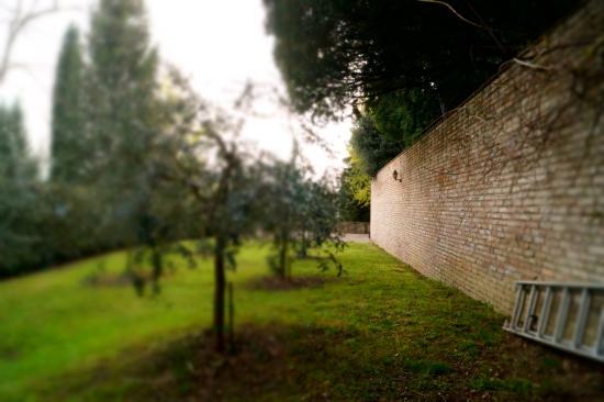 Locanda di Villa Torraccia: una sezione del giardino con ulivi