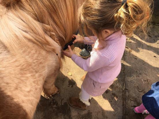 Sicklinghall Pony Parties: photo8.jpg