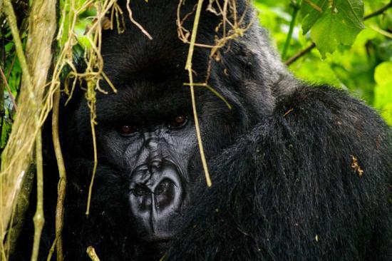 Saso Uganda Safaris