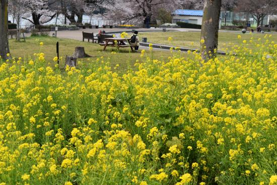 Kanagawa Prefectural Lake Tsukui Shiroyama Park, Water Garden, Flower Garden