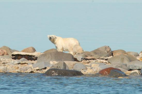 Manitoba, Canada: Meet Churchill's Beluga Whales