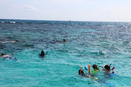 George Town, Grand Cayman: Snorkeling by the reef