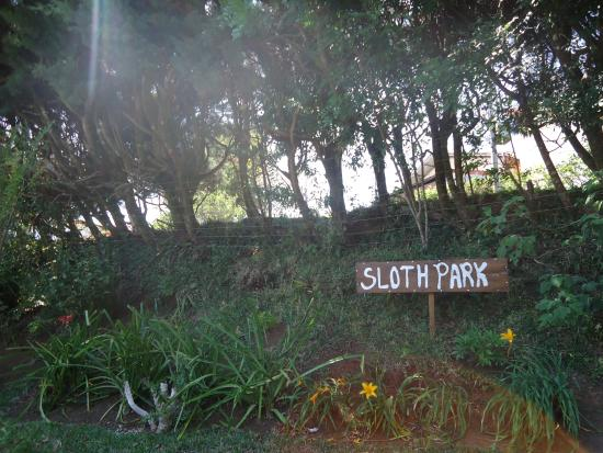 """Hotel y Cabinas Don Taco: The """"Sloth Park"""" is part of the grounds of Hotel Don Taco. But sloths can't read English."""