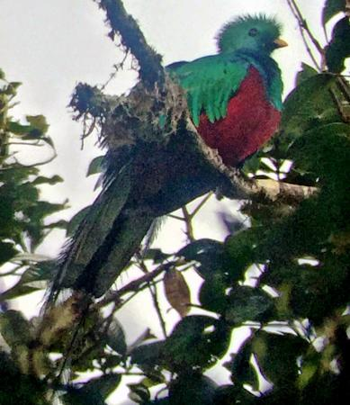 Arco Iris Lodge: Found! Monteverde.