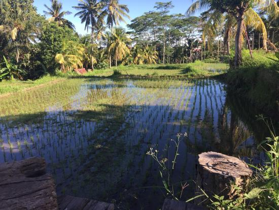 Ubud Sari Health Resort: View from the pool