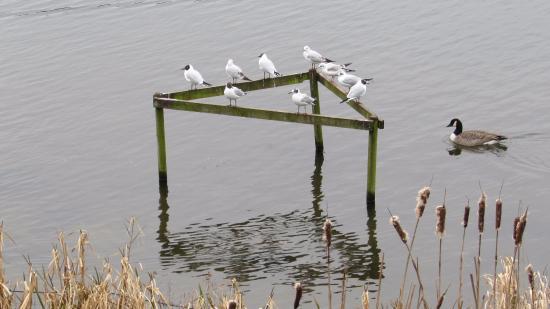Westport Lake Visitors Centre: On the lake