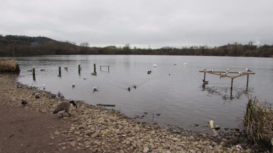 Westport Lake Visitors Centre: Westport Lake
