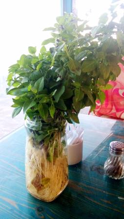 Shams Hotel: Tables in the restaurant are showered with basil plants.. they smell wonderful