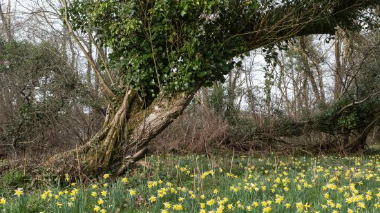 Dunsford, UK: Meadows near house