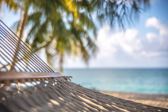 London House Condominiums: London House Cayman Beach Hammock Day