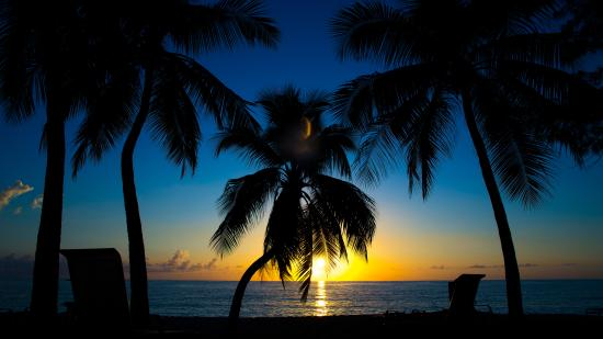 London House Condominiums: London House Cayman Palm Tree Sunset
