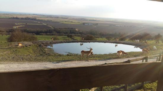 Giraffe Lodge Photo