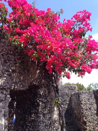 Beautiful spring day flowers galore picture of coral castle coral castle beautiful spring day flowers galore mightylinksfo