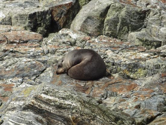 Queenstown, Nieuw-Zeeland: Milford Sound