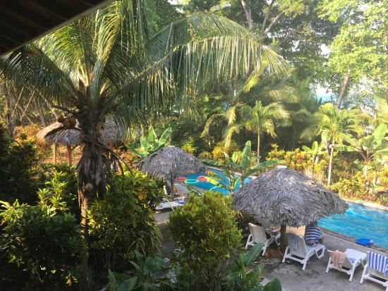 Bluff Beach Retreat: View from second floor - pool, vegetation and ocean
