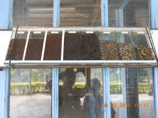 Diversi tipi di t a partire dalla medesima materia prima - Diversi tipi di api ...