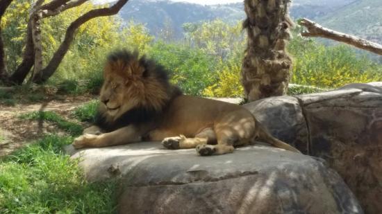 San Diego Zoo Safari Park: 20160329_135243_large.jpg