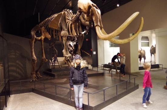 Musee Paleontologique de Zurich